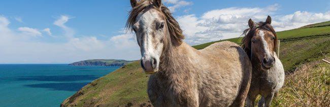 Hest og fest